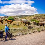 Cyclist encounter with wild horses in Patagonia