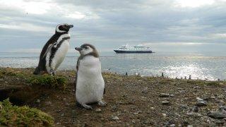 penguins - australis cruise argentina