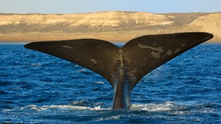 What is the best season to see southern right whales?
