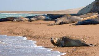 sea lions - peninsula valdes, patagonia
