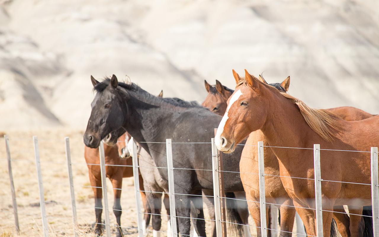 horse riding tour patagonia
