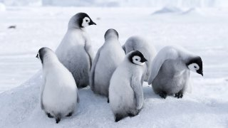 Antarctica Cruise aboard the World Explorer - terra argentina