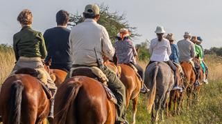 horses, posada uguay - esteros del ibera, argentina
