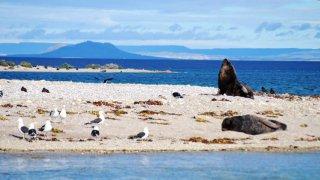atlantic patagonia