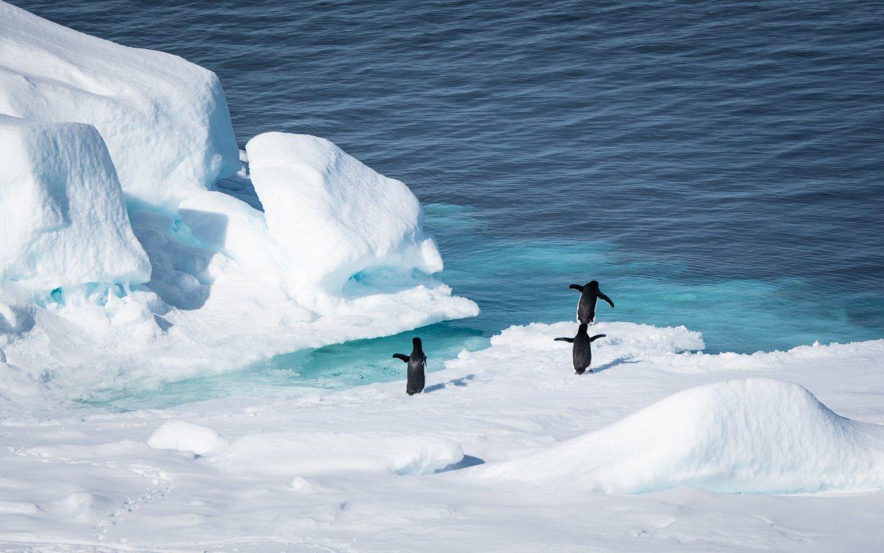 antarctica Adelie penguins - terra argentina