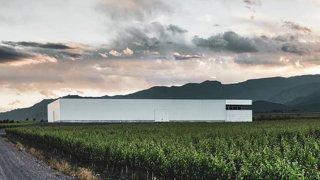 argentinian vineyards