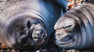 sea lions, peninsula valdes