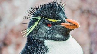 puerto deseado penguin