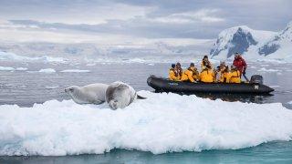 crabeater seal watch - antarctica cruise