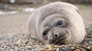 Driving along the Coast: Atlantic Patagonia, refuge of marine wildlife