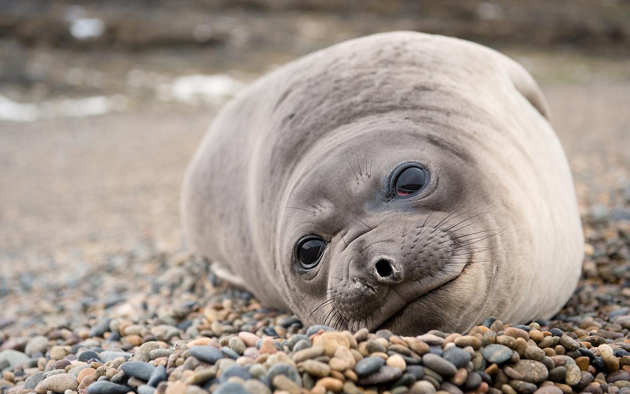 sea lion, atlantic patagonia tour - terra argentina